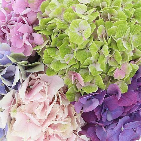 bouquet-d-hortensias-2572.jpg