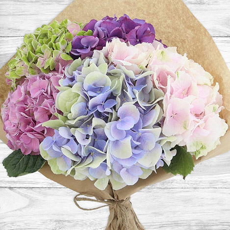 bouquet-d-hortensias-2573.jpg