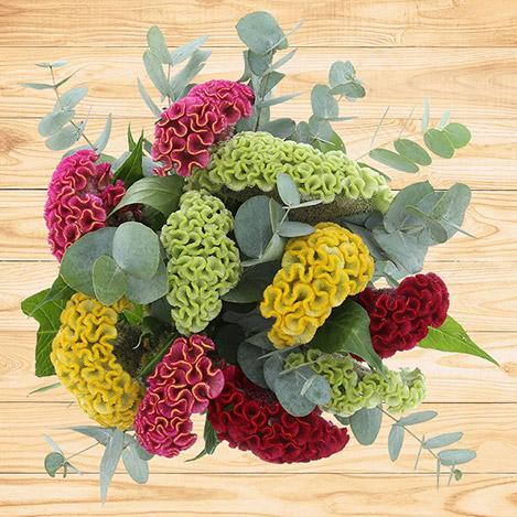 bouquet-de-celosies-varies-2547.jpg