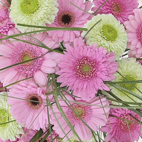 bouquet-de-germinis-roses-xl-4337.jpg