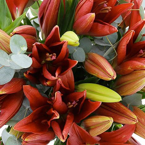 bouquet-de-lys-rouges-3045.jpg