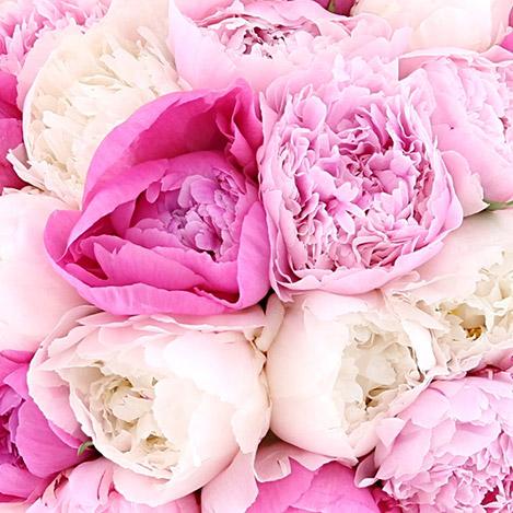 bouquet-de-pivoines-et-son-vase-4821.jpg
