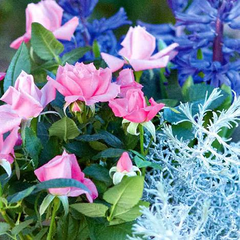 composition-plantes-6370.jpg
