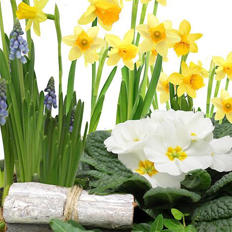 jardiniere-d-amour-1359.jpg