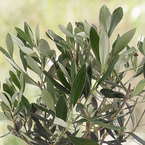 olivier-3013.jpg