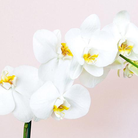 orchidee-7068.jpg