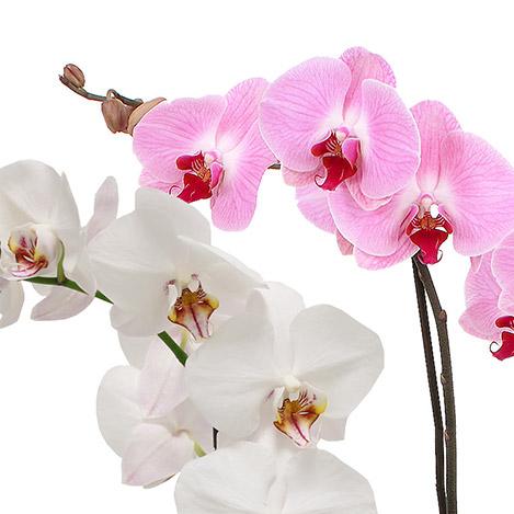 orchidees-1577.jpg