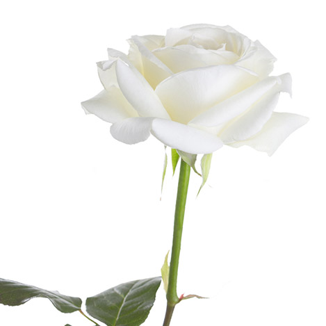rose-blanche-et-ses-amandes-gourmand-2484.jpg