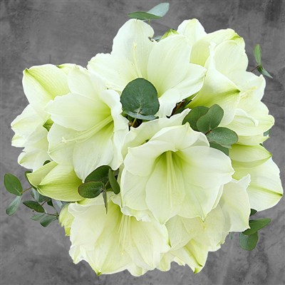 Bouquet d'Amaryllis Blanc