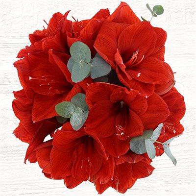 Bouquet d'Amaryllis Rouge