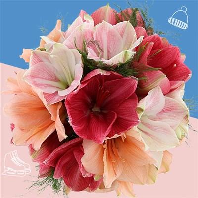 Bouquet d'Amaryllis variées
