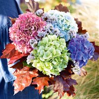 01-automne-hortensia-200-7031.jpg