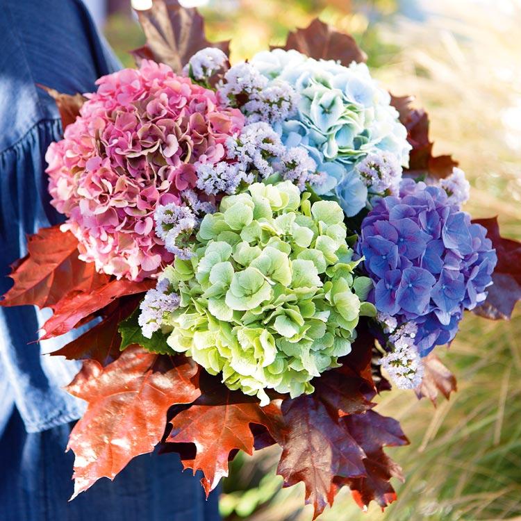 01-automne-hortensia-750-7031.jpg