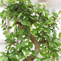 02-grand-bonsai-200-4119.jpg