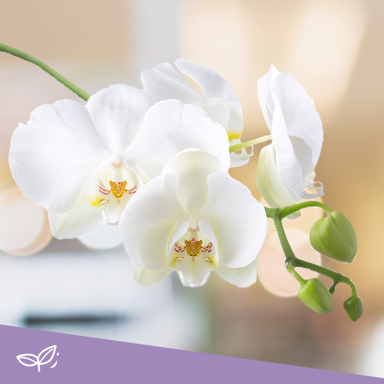 02-orchidee-sur-support-750-3971.jpg