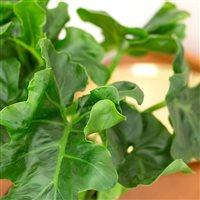 02-trio-de-plantes-vertes-et-leur-ca-200-5215.jpg