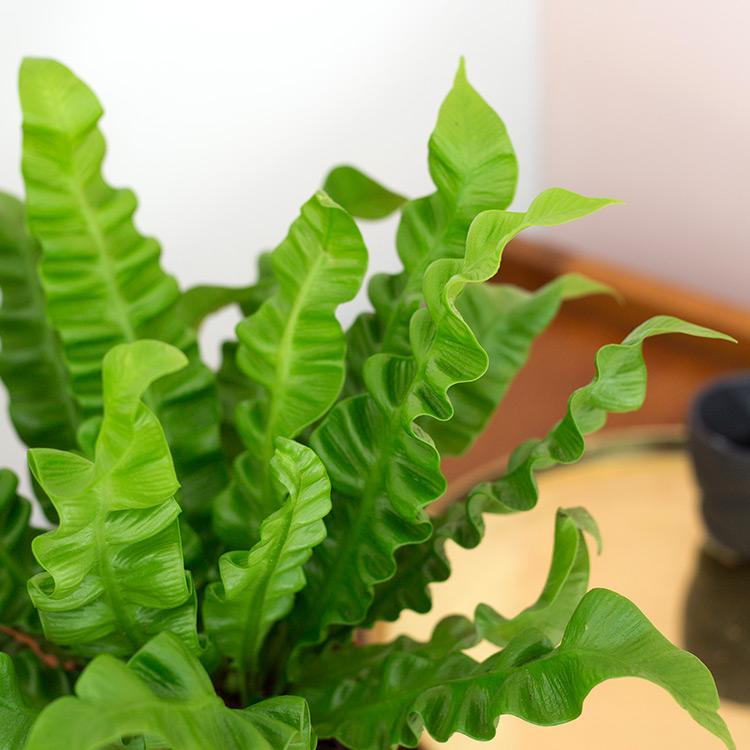02-trio-de-plantes-vertes-et-leur-ca-750-5214.jpg
