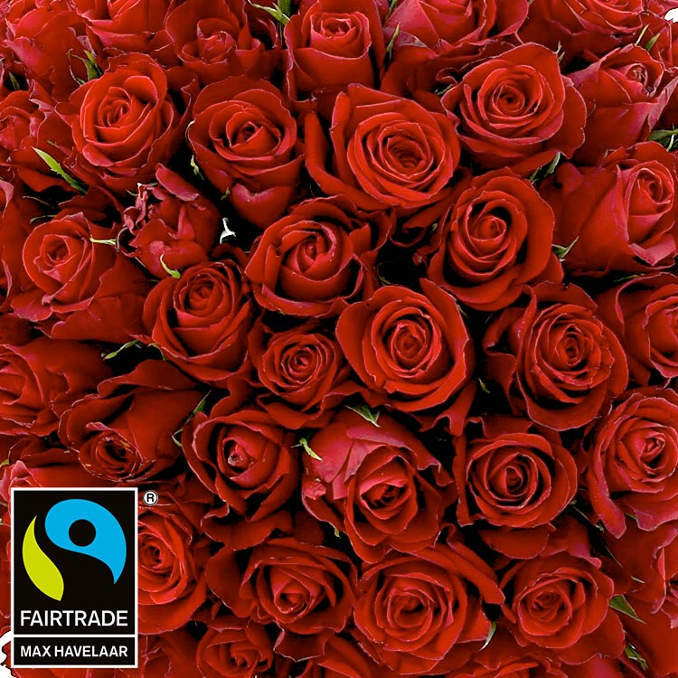 101-roses-rouges-200-2954.jpg