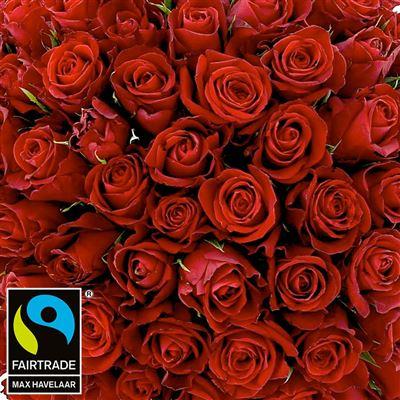 101 roses rouges et son vase