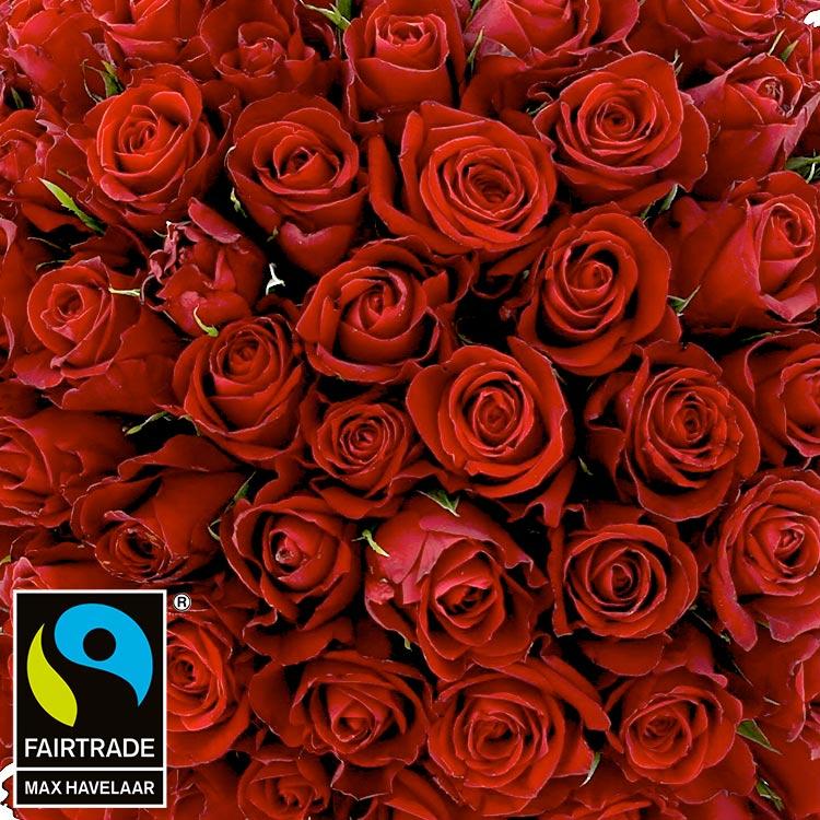 101-roses-rouges-et-son-vase-200-3016.jpg