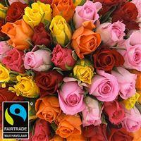 101-roses-variees-200-2957.jpg