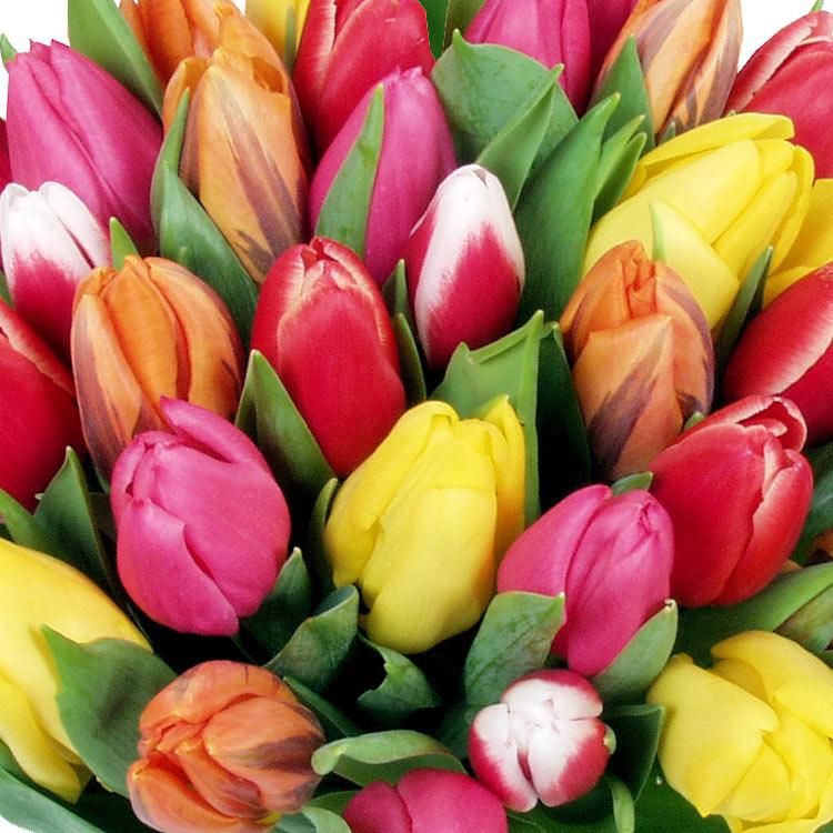 30-tulipes-750-900.jpg