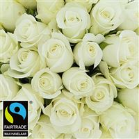 40-roses-blanches-200-4126.jpg