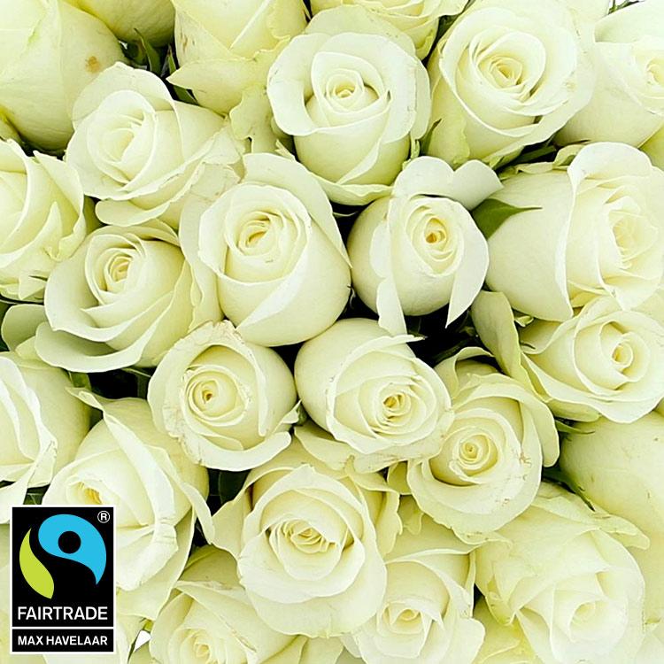 40-roses-blanches-et-son-vase-750-5315.jpg