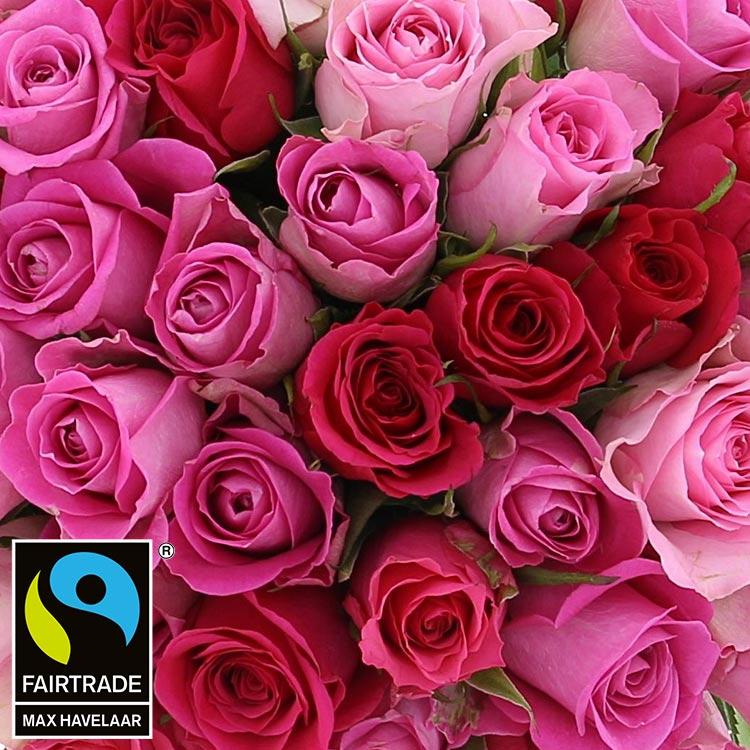 40-roses-en-camaieu-rose-200-2970.jpg