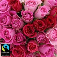 40-roses-en-camaieu-rose-et-son-vase-200-5344.jpg