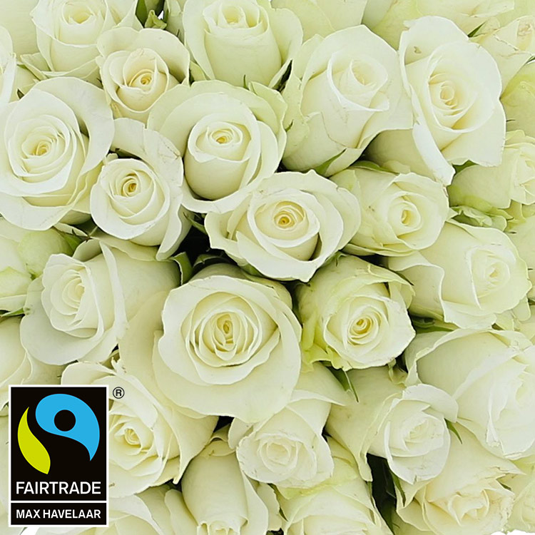 50-roses-blanches-200-2964.jpg