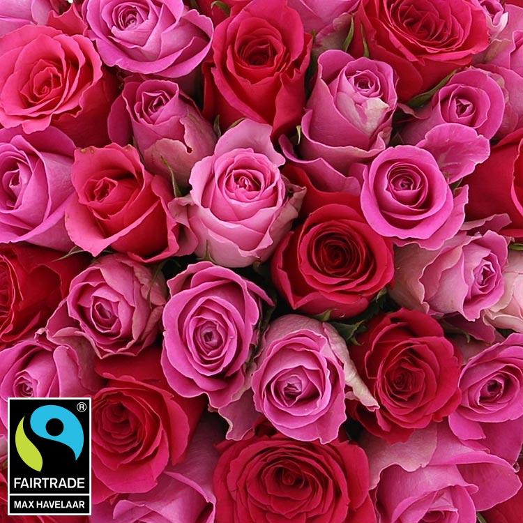 50-roses-en-camaieu-rose-750-5340.jpg