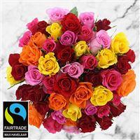 50-roses-multicolores-200-3008.jpg