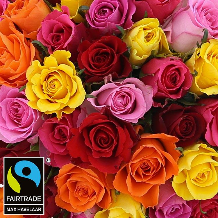 50-roses-multicolores-vase-200-3005.jpg