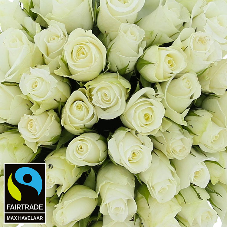 60-roses-blanches-200-2966.jpg