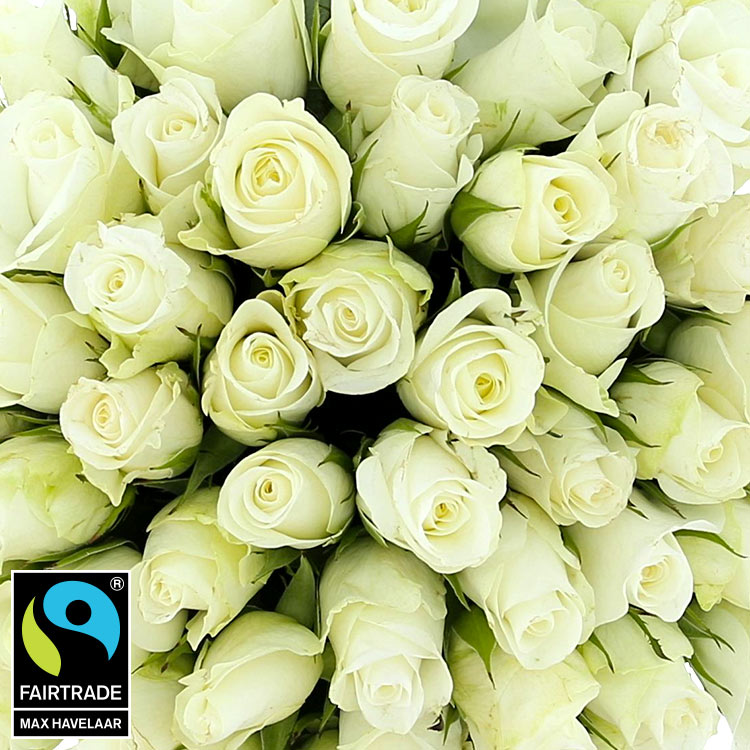 60-roses-blanches-200-5313.jpg