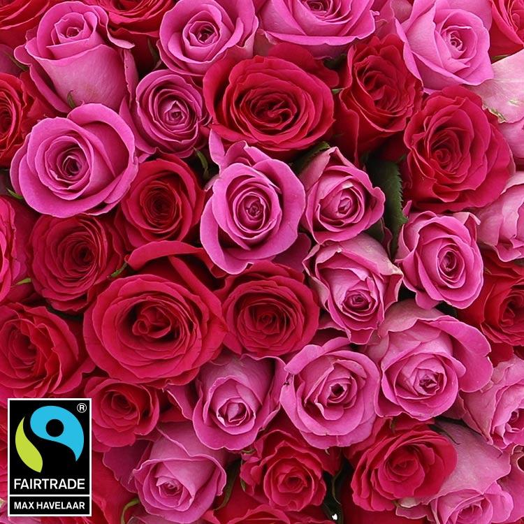 60-roses-en-camaieu-rose-750-5342.jpg