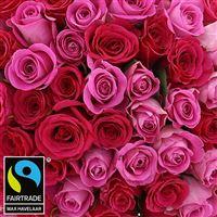 60-roses-en-camaieu-rose-vase-200-2980.jpg