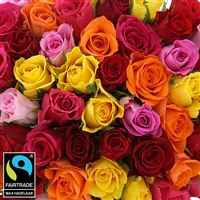 60-roses-multicolores-vase-200-5337.jpg