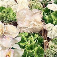 angelus-blanc-200-1615.jpg