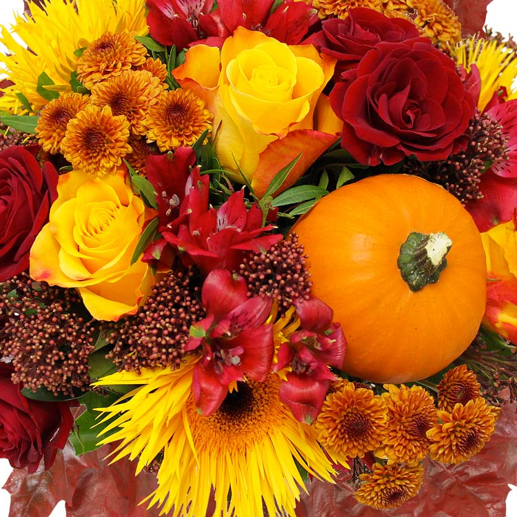 automne-xl-750-2054.jpg