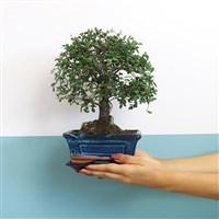 bonsai-200-5417.jpg