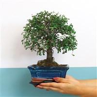 bonsai-200-6567.jpg