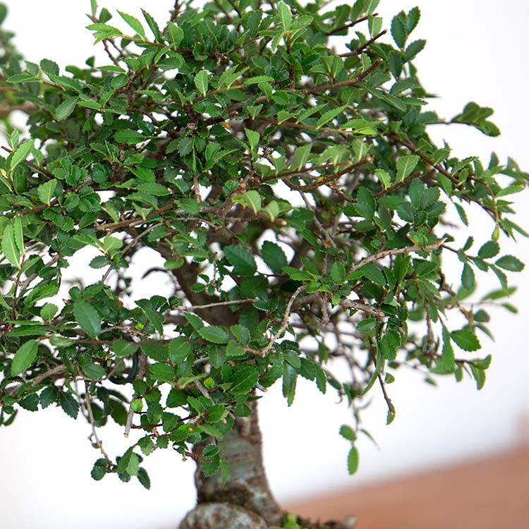 bonsai-750-5232.jpg