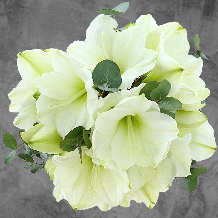 bouquet-d'amaryllis-blanches-et-son--200-3541.jpg