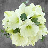 bouquet-d'amaryllis-blanches-xl-et-s-200-3540.jpg