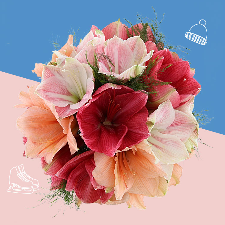 bouquet-d'amaryllis-variees-xl-et-so-200-3414.jpg