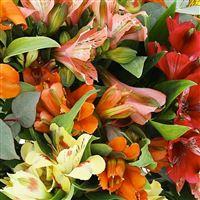 bouquet-d-alstroemerias-orange-200-3027.jpg