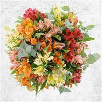 bouquet-d-alstroemerias-orange-xl-et-200-3141.jpg