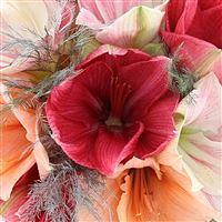 bouquet-d-amaryllis-et-son-vase-200-3664.jpg